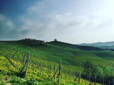 Gaterra vineyard in La Morra and the 160 year old tree on the hill. #Barolo | via Molly Sider