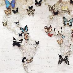 If Kate displayed a world map of butterflies.