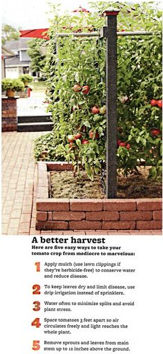 What's New With Tomatoes. Try these products for your tomatoes garden