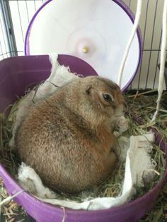 Chip the Prarie dog