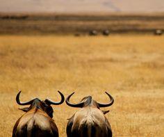 Tanzania. Photo by Kerrie Glendenning