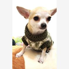 Warm fashionable pet sweater in dark olive mixed color. This dog sweater is handmade crochete and designed by Myknitt Designer Dog Clothes. Very cute and adorable, soft and comfortable to be worn. Custom dog clothes are welcome. Please kindly check your pets measurements with my pattern size