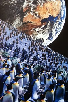 Penguins, John Turck Collage