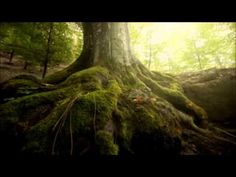 2 Hours Of Emotional Celtic Music - Vol.1 - YouTube