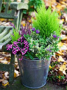 How gorgeous is this! Winter Plants, Winter Garden, Fall Planters, Garden Planters, Autum Flowers, Beautiful Home Gardens, Pot Jardin, Pot Plante, Dream Garden