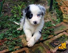 My fav dog the Border collie mixed with i think a dalmation ?  Cute all the same <3