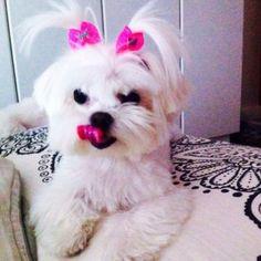 Nani A cachorrinha mais linda e fofa do mundo!!! Muito carinhosa e adora dar beijinho!!! A Naninha