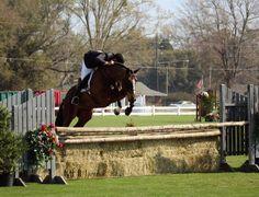 Gulf Coast Winter Classics Named World Championship Hunter Rider Event | Horse Back Magazine