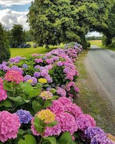 Startling Unique Ideas: Front Yard Fence Near Me Easy Modern Fence.Front Yard Iron Fence Wooden Fence How To Build. Hortensia Hydrangea, Hydrangea Colors, Hydrangea Garden, Hydrangeas, Fence Landscaping, Backyard Fences, Decorative Garden Fencing, Belle Plante, Garden Inspiration