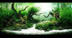 aquarium+river+stone - Hľadať Googlom Carved Skulls, Goldfish Aquarium, River Stones, Aquascaping, Planted Aquarium, Freshwater Aquarium, Terrariums, Aquariums, Betta
