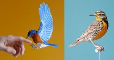 Year after year, artist and designer Diana Beltran Herrera (previously) continues to astound with her near perfectly accurate reproductions of birds using paper. The fragile sculptures shown here are a mix of private commissions and pieces for several luxury brands who use her work i