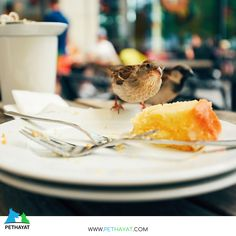 Yabani hayvanları beslemeyi unutmayın 🙏🦜🐦 #pethayat #pethayatcom #petshop #kuş #uçankuş #güzelkuş #renklikuş #muhabbetkuşu #yıldızparkı #gülhaneparkı #floryaatatürkormanı #zeytinburnutıbbibitkilerbahçesi #maçkaparkı #fethipasakorusu #fenerbahçeparkı #nezahatgökyiğitbotanikbahçesi #mihrabattabiatparkı #polonezköytabiatparkı #baltalimanıjaponbahçesi #göztepetabiatparkı #neşetsuyutabiatparkı #atatürkarboretumuparkormantabiatparkı #taksimgeziparkı #bakırköybotanikpark #fatihormanıtabiatparkı Bird, Animals, Animales, Animaux, Birds, Animal, Animais