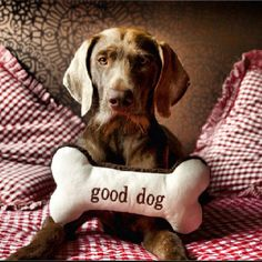 Good Dog Lóis