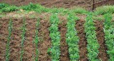 design your site Garden Works, Site Design, Permaculture Garden, Gardening, Plants, Ideas, Garten, Flora, Plant