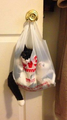 Cat Stuck In A Bag cute animals cat cats adorable animal kittens pets kitten funny pictures funny animals funny cats Animals And Pets, Funny Animals, Cute Animals, Baby Animals, Animals Images, Funniest Animals, Draw Animals, Funny Animal Pictures, Funny Images