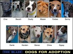 TOLEDO, OH.....PLEASE HELP ~ Lucas County Dogs for Adoption: 9-19, Toledo Ohio. Full list is available.  Click on this picture for more info!!!