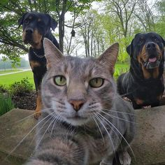 yoremahm #boss 2017/05/24 11:07:09 Silly Cats, Cute Cats And Kittens, Crazy Cats, Kittens Cutest, Nature Animals, Animals And Pets, Group Of Cats, Cute Funny Animals, Beautiful Cats