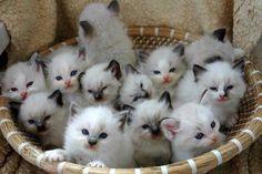 Basket full of cuddly kittens