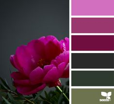 Explore Design Seeds color palettes by collection. Color Schemes Colour Palettes, Colour Pallette, Color Combos, Design Seeds, Colours That Go Together, Color Balance, Paint Colors For Home, Color Swatches, Color Theory