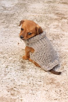 Knit a tiny sweater for a tiny puppy!