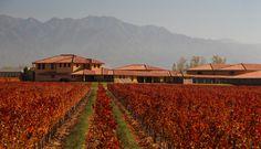 #OTOÑO #MENDOZA #VIÑEDO #BODEGA #VINO Mendoza, Vineyard, Tours, Outdoor, Dresses, Scenery, Mountain Range, Parking Lot, Wine Cellars