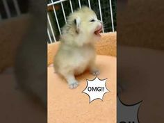 Kittens Cutest Baby, Cute Baby Cats, Funny Bets, Funny Babies, Cute Babies, Funny Cat Videos, Cat Gif, Dog Cat, Dogs