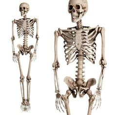 Zombie Halloween Decorations, Haunted House Decorations, Scary Decorations, Halloween Scene, Halloween Skeletons, Halloween Party Decor, Human Skeleton, Funny Skeleton, Horror Party