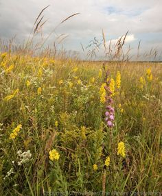 As prairie managers and ecologists, we think a lot about the relative abundance of plants, but not necessarily fungi or bacteria...