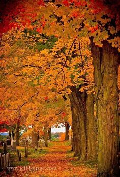 New England Fall Foliage, Street Trees, Autumn Scenes, Seasons Of The Year, Fall Pictures, Mother Nature, Puerto Rico, Beautiful Places, Beautiful Boys
