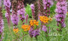 How to Find Native Plants for Your Garden