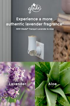 Surround yourself with serene and relaxing notes of lavender and aloe. Fill your home with a beautiful scent and adjust it to fit your mood. NEW Glade® Tranquil Lavender & Aloe. Feel the power of true fragrance. Container Gardening, Gardening Tips, Horticulture, Garden Projects, Projects To Try, Herbal Medicine, Backyard Landscaping, Vegetable Garden, Indoor Plants