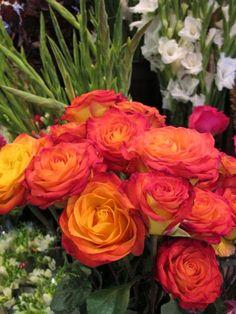 Large beautiful roses!