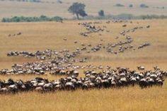 Serengeti National Park   Fully ATOL Protected Safari Holidays to Tanzania