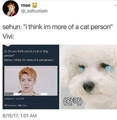 Kyungsoo, Chanyeol, Sehun Vivi, Exo Memes, Exo K, Meme Faces, Kpop, Pop Pop, Cheater