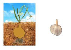 "Дидактична гра ""Що росте на городі"" Plants, Cards, Plant, Maps, Playing Cards, Planets"
