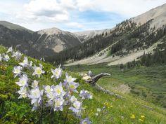 Tabor Creek Trail Colorado - Experience Culture #ExpediaWanderlust