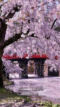 Hirosaki Castle (Hirosaki Park), Aomori, Japan. M.M