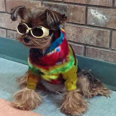 T Shirt Doggie Skins Hoodie Cotton Tie Dye Blue Purple Medium Small Dog-C. Smale #DoggieSkins