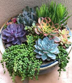 Non-Ceramic: The way the succulents are going would make a great design.