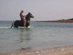 "A riding horse is taking a bath at the Little Beach ""Palude del Conte"", Porto Cesareo, Salento, Puglia"