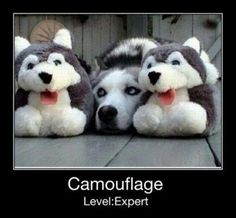 this one's cool and unexpected #dogs #humor #camouflage