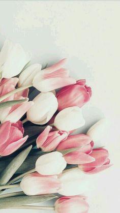 Ideas For Flowers Tulips Wallpaper - Vintage - Blumen Pink Tulips, Tulips Flowers, Vintage Flowers, Pretty Flowers, Flowers Garden, Pink Roses, Flowers Nature, Floral Flowers, Tea Roses
