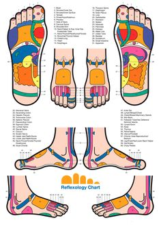 Foot reflexology chart.  Google Image Result for http://naplesrolfing.com/wp-content/uploads/2010/06/Reflexology_Foot_Chart1.gif