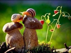 Snails and mushrooms
