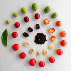 The journey of a coffee bean