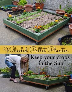 How to make a Wheeled Pallet Planter - it allows you to pull your plants around flat spaces and both into and out of the sun. Great for small patios and gardens! #pallet