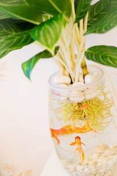 How to make your own little home aquaponics set up — desima #AquaponicsDiy #HomeHydroponics