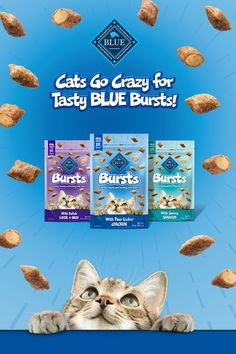 Cats go crazy for delicious BLUE Bursts featuring real meat! Cute Puppies, Cute Dogs, Cute Babies, Cute Baby Animals, Funny Animals, Funny Grumpy Cat Memes, Donkey Kong Country, Pokemon, Blue Cats