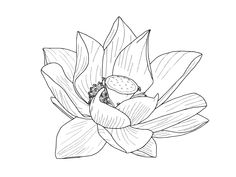 DOMEI Stamped Cross Stitch Kit Lotus Flower 18.9 x 18.9 inches