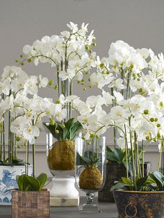 There is a reason OKA's phalaenopsis orchids are so popular - they are realistic, classic and beautiful.